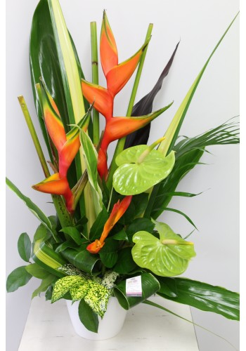 Arrangement funéraire tropical